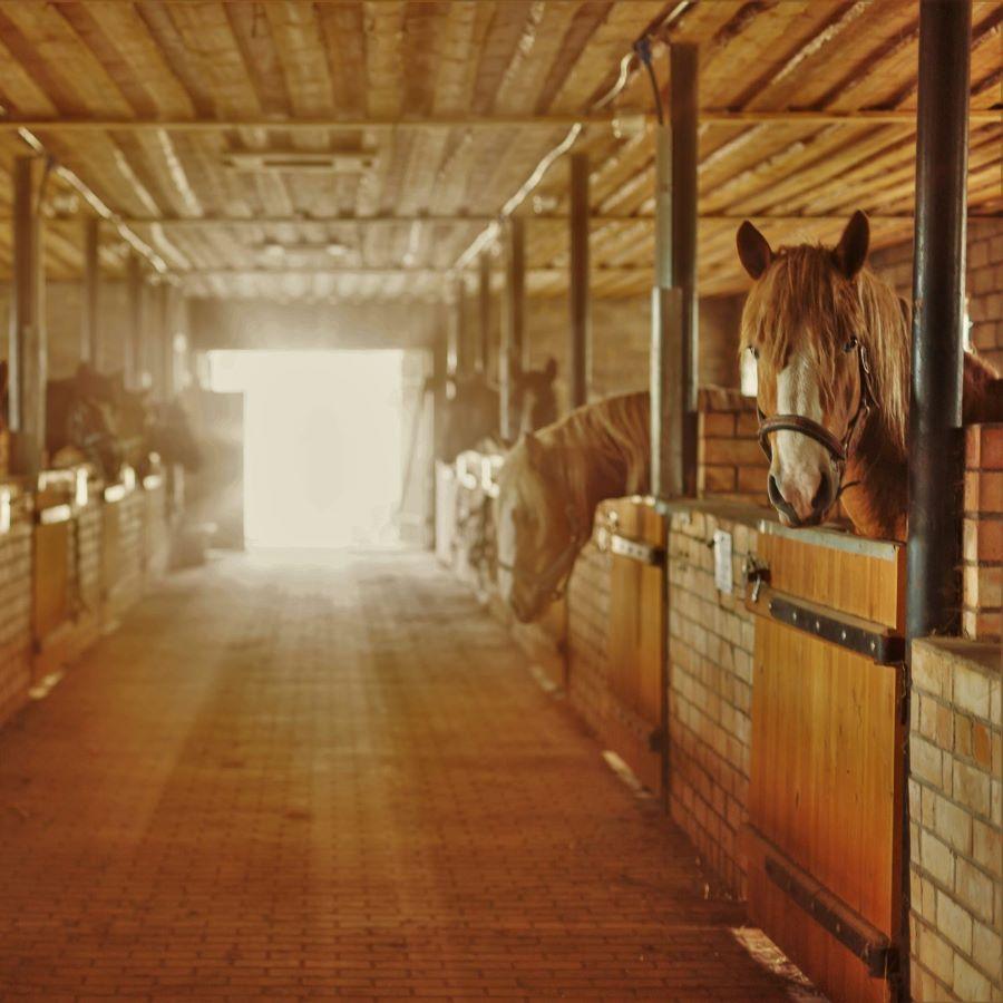 Zirgu stallis sēta Klajumi