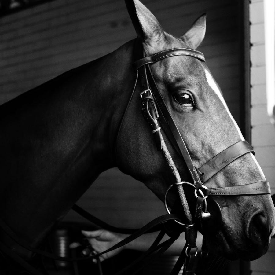 Zirgu apmācība Dārziņi